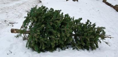 Holiday Tree Recycling Program